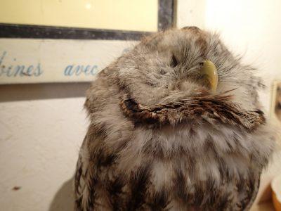 モリフクロウ