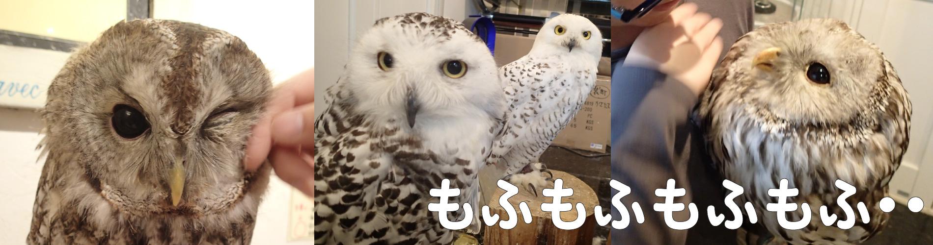 広島初のフクロウカフェ オウルドベース